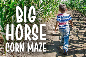 AMR_Blog_Graphics_cornmaze (002)